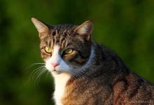 ... cat model ...
